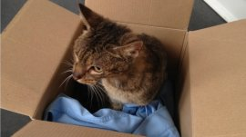 Scottish SPCA appealing for information after a cat was dumped in a sealed cardboard box in an alleyway, Gilmerton Dykes Avenue in Edinburgh, uploaded Friday September 18 2015