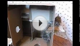 Degu playhouse made from a cardboard box