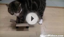Small Boxes For Maru